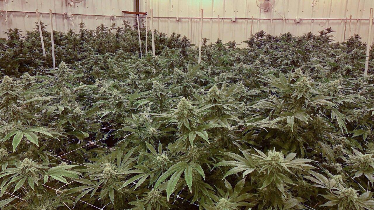 Medical Marijuana13 (1).jpg