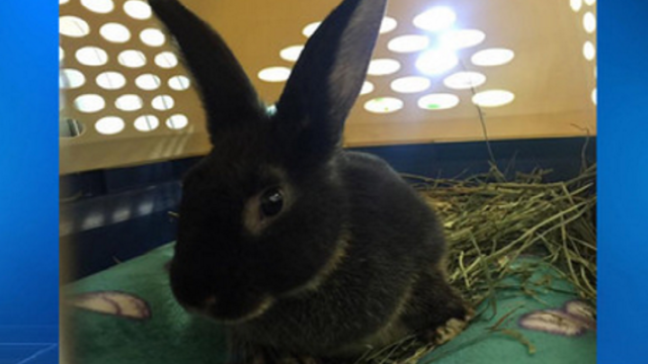 Rabbit recovers after abuse by 3 teen girls