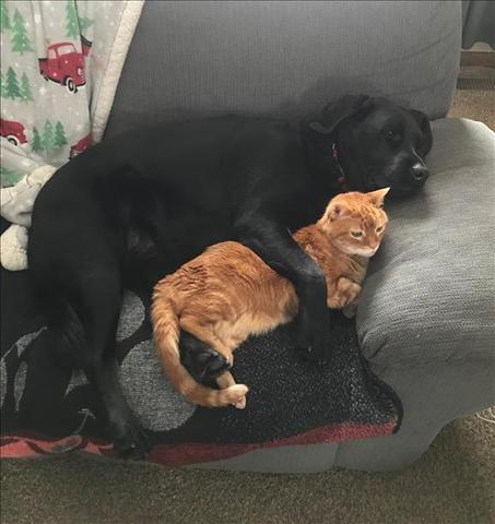 PHOTOS: Viewer send in pics of their pets for National Love Your Pet Day