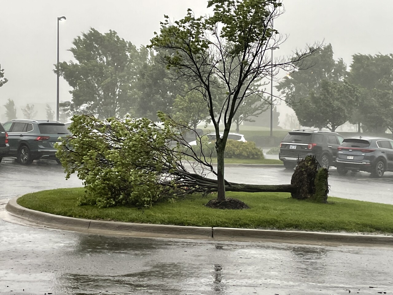 tree uprooted by storms in Overland park