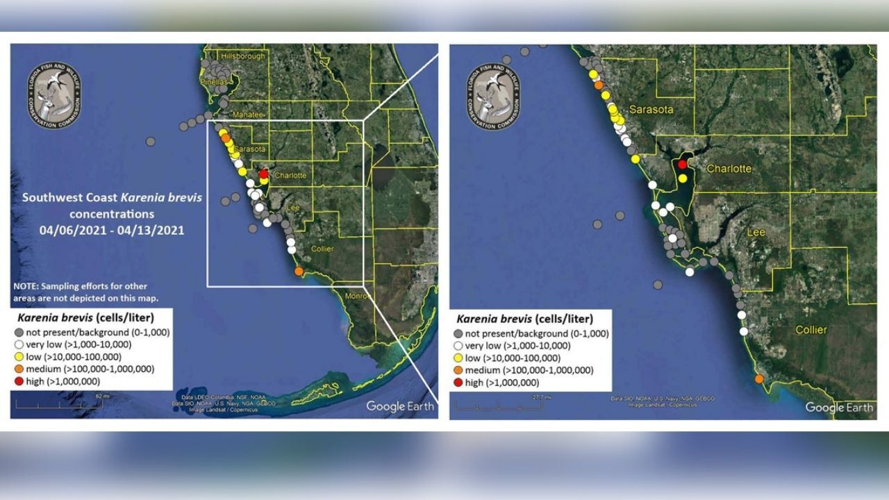 FWC red tide map april 15.jpg