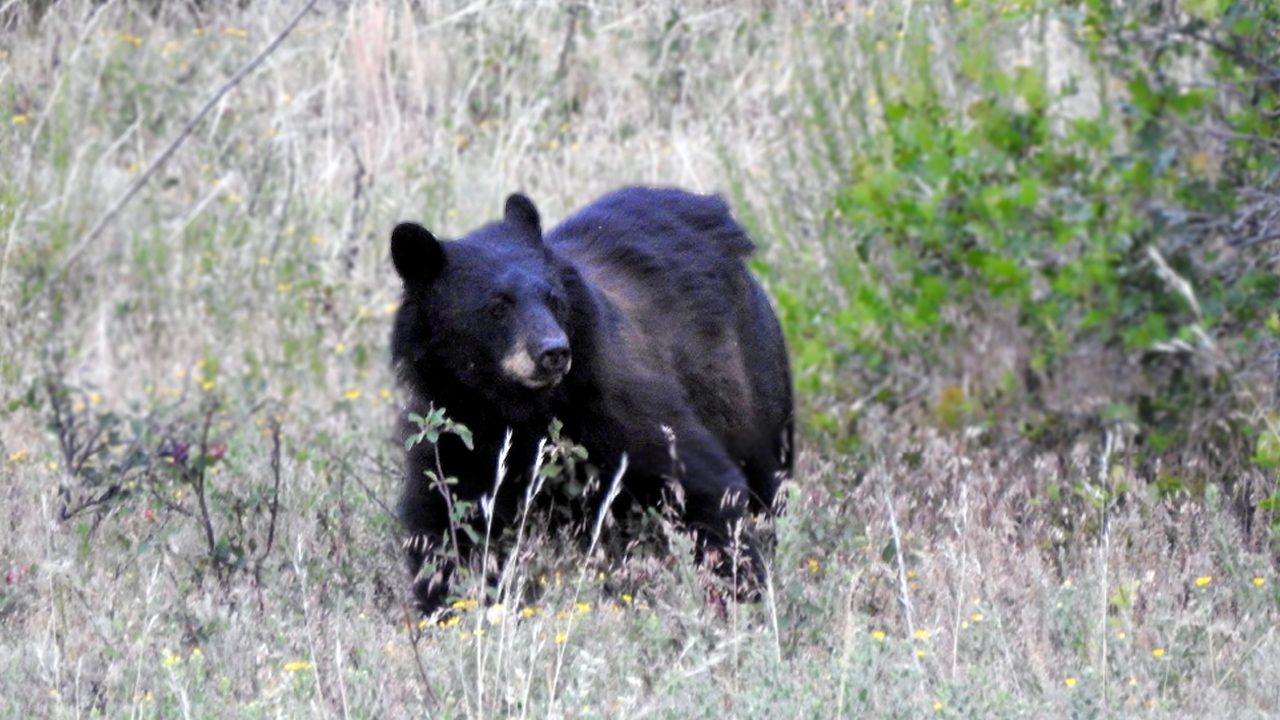 Bear attack inside home in Aspen area leaves person with 'severe swipe injuries' to face, neck