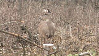 Deer dominate West Michiganroadways