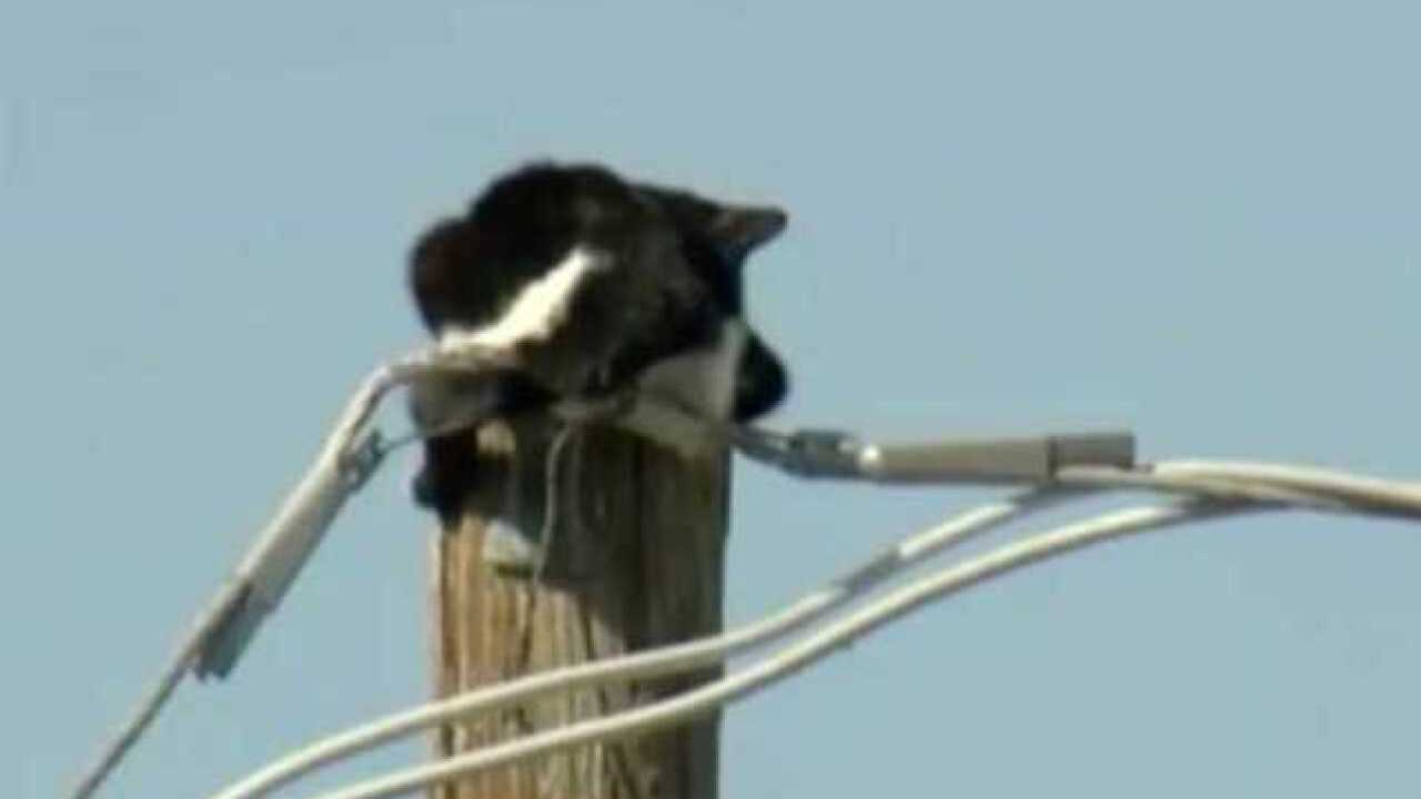 LIVE VIDEO: Cat stuck on pole in Phoenix