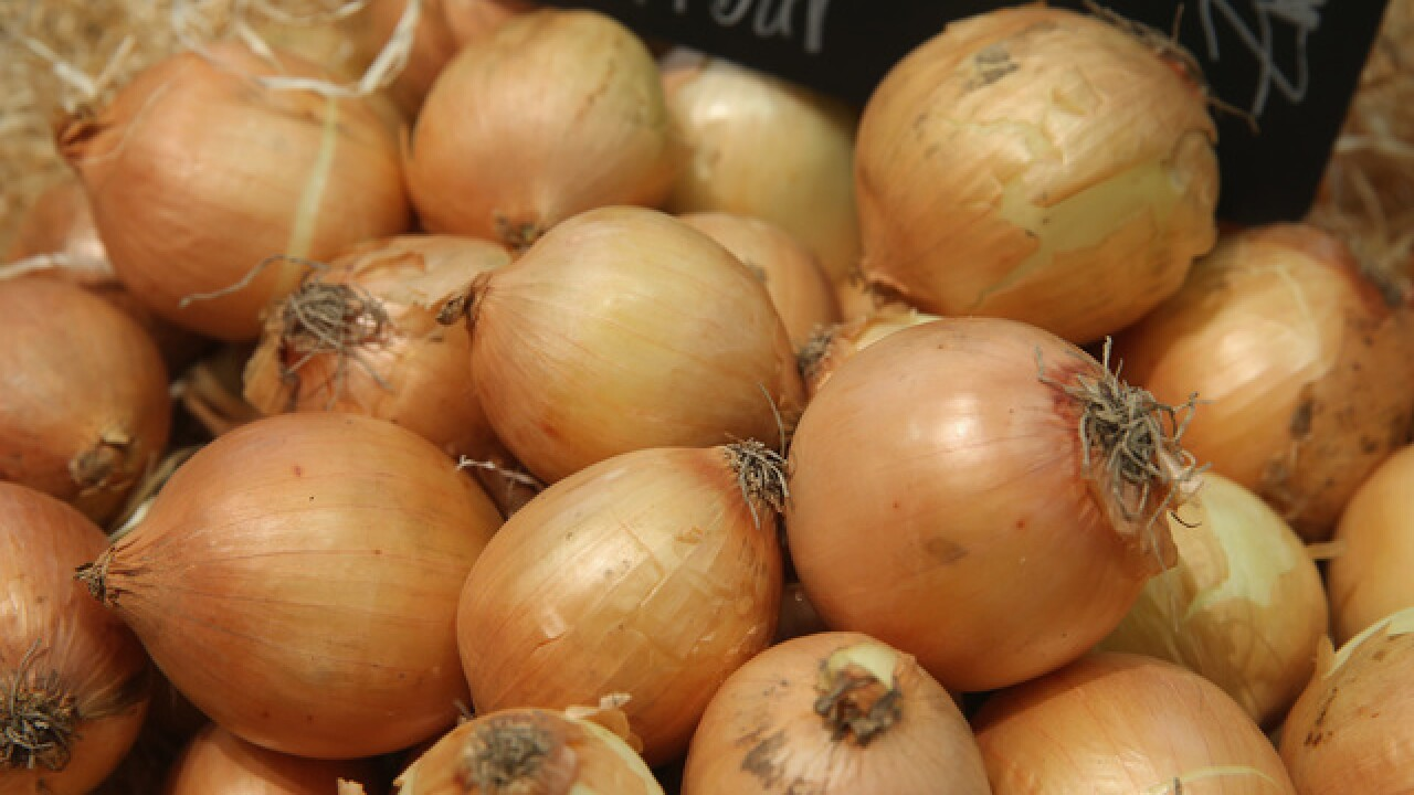 Insects carrying crop virus spotted in Idaho onion fields