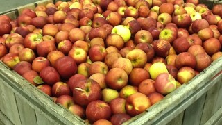 Apples sold in Indiana recalled for possible Listeria contamination