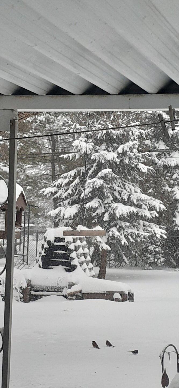 backyard bbq susan glembin.jpg