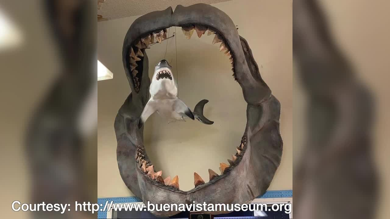 Science Sundays: Sharktooth