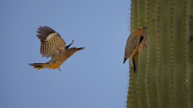 Babies of the Sonoran Desert