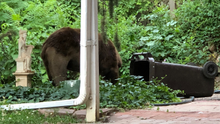 bear-in-trash.png