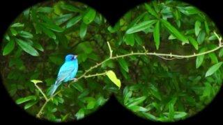 bird watching.jpeg