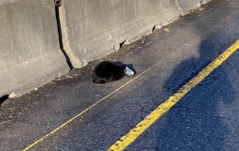 Can Head Cat.JPG