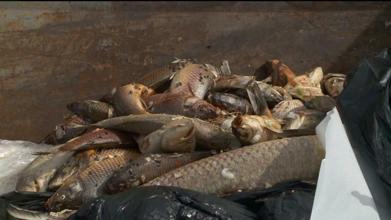 Hundreds of dead fish found in lake