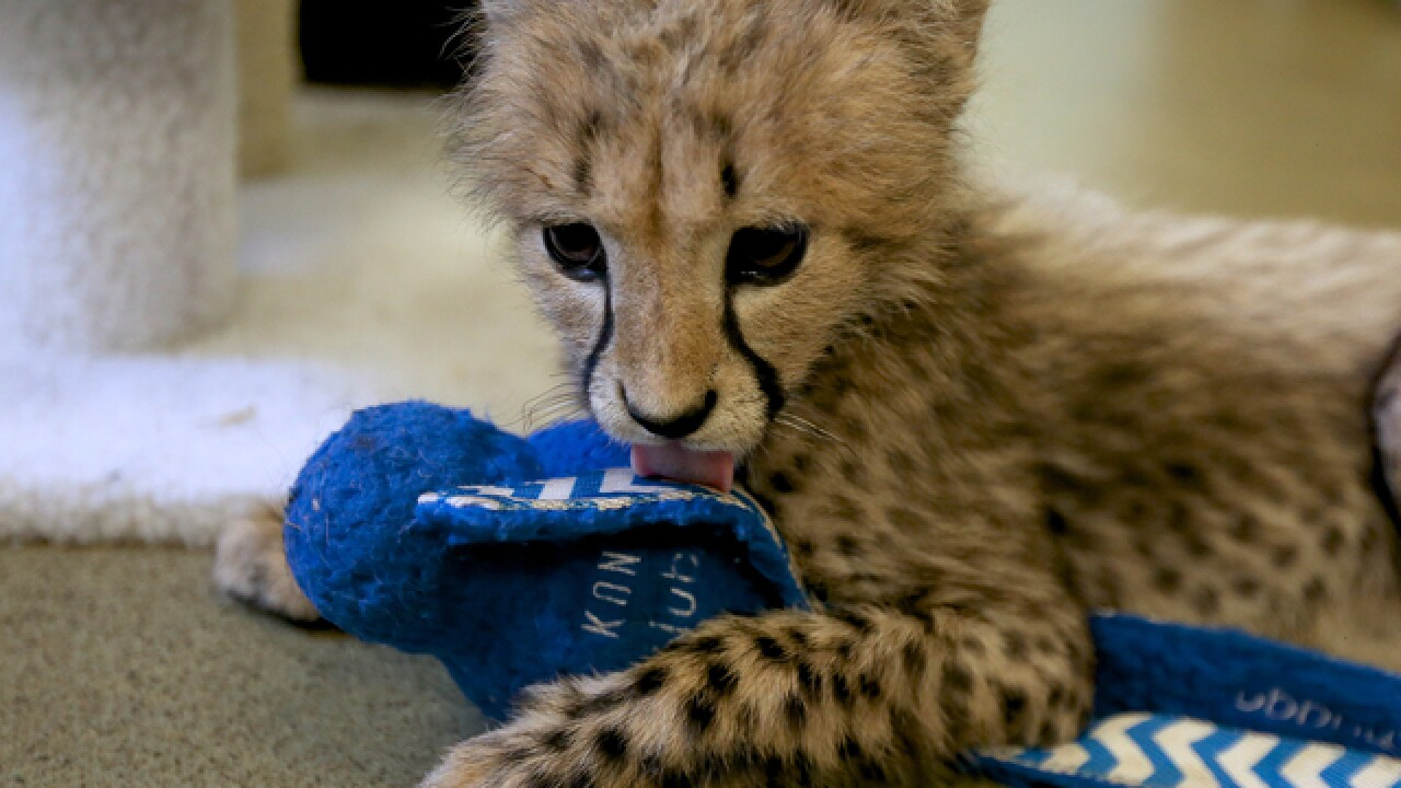 VIDEO: Zoo babies are back and cuter than ever
