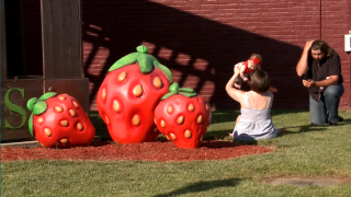 Middle Tennessee Strawberry Festival returns for 80th anniversary