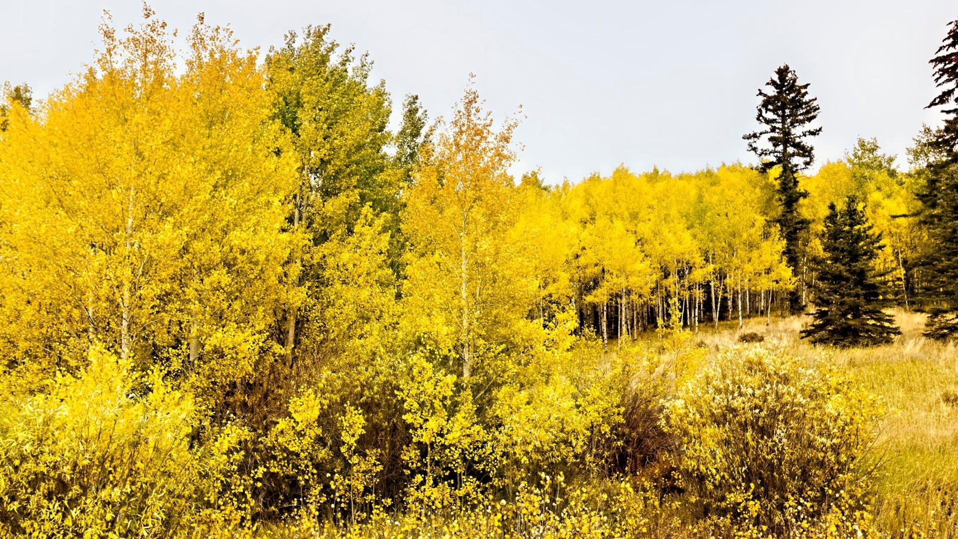 Highway 67 near Divide Larry Marr.jpg