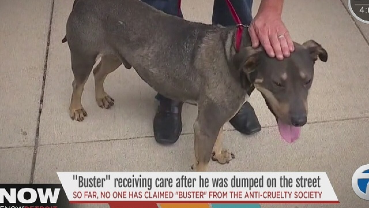 Update on Buster after he was dumped in Detroit