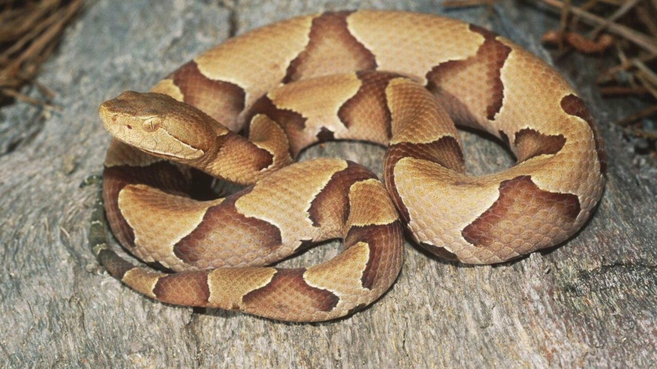 Snakes are popping up across Virginia – but here's why killing them isillegal
