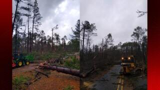 Kisatchie Forest damage.jpg