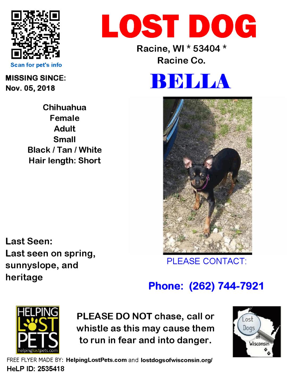 110518 Bella Chihuahua Adult.png