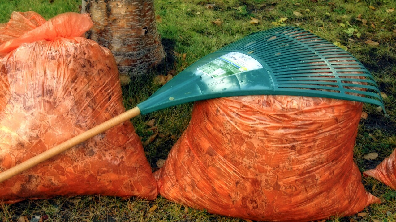 yard waste raking leaves