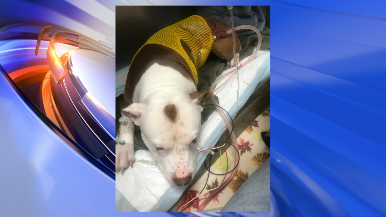Teen charged for breaking into home of Virginia Beach officer, shooting familydog