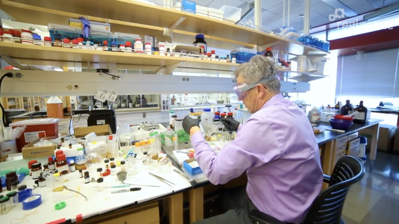 Cancer-fighting drug company, Reglagene, does research at the University of Arizona.