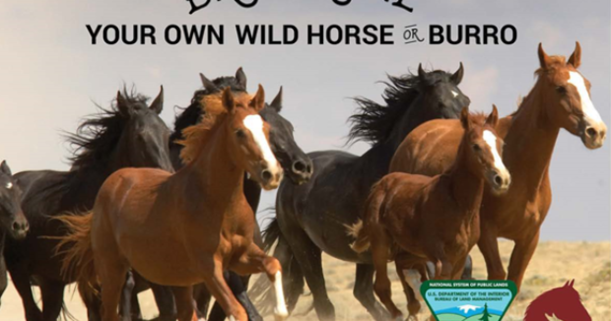 Now's your chance to adopt a wild horse or burro