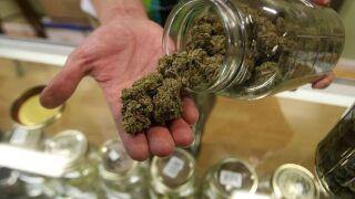 Big marijuana distribution ring busted