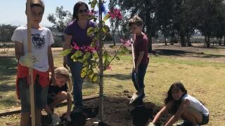 Balboa Park receives new trees, lends juniper to new craft beer