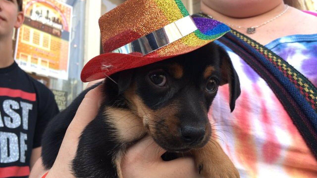 PICS: Pups of Circle City Pride
