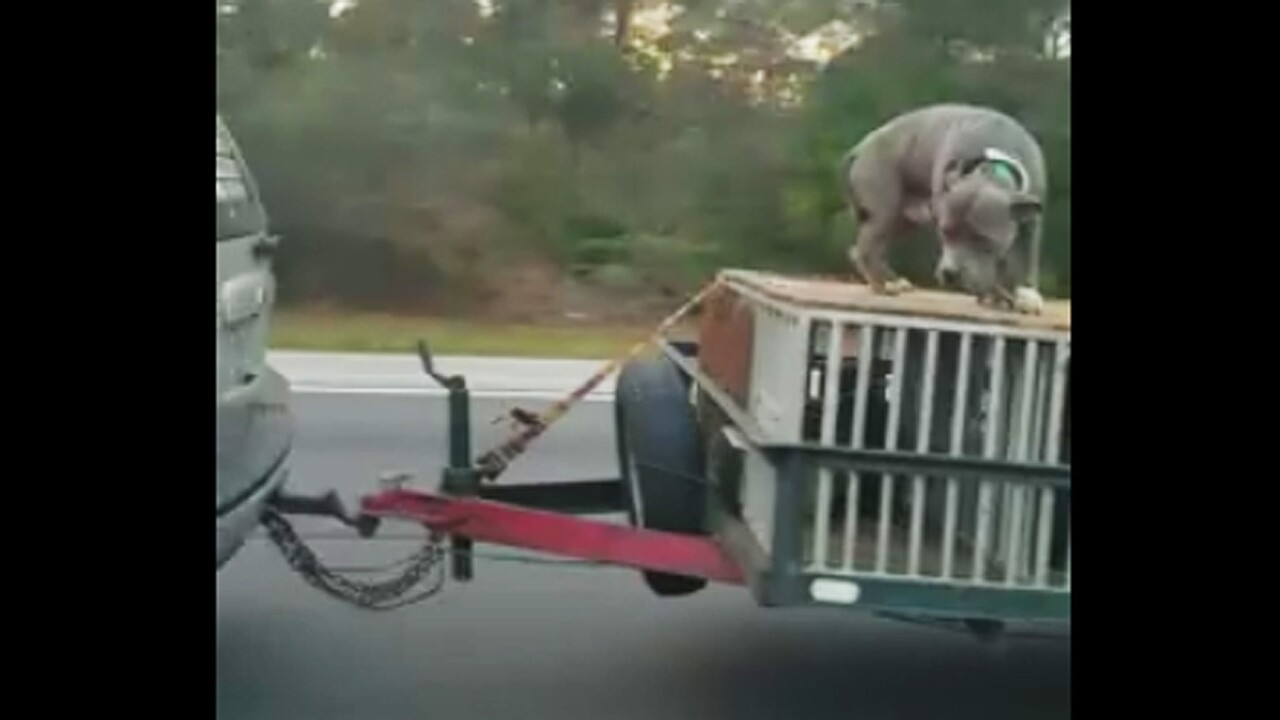 Video shows dog tied on top of crate being towed down Florida highway