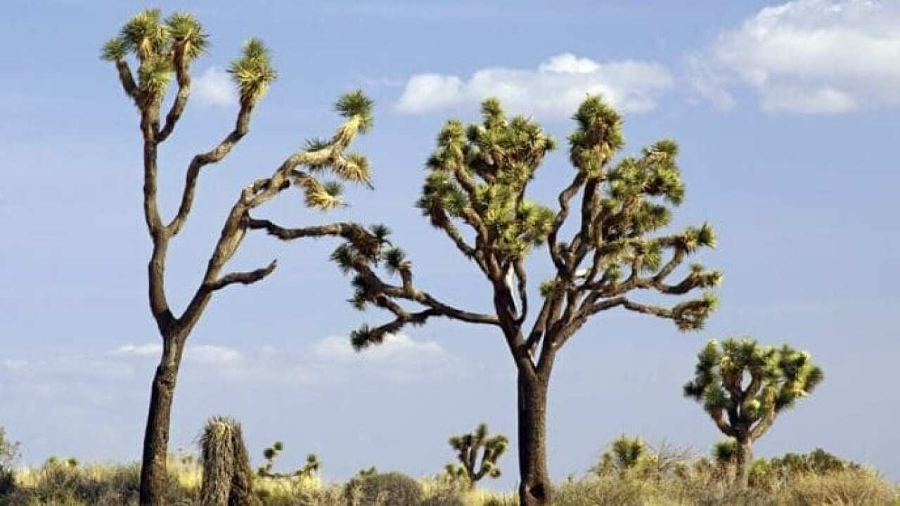UPDATE: Joshua Tree park remaining open despite government shutdown