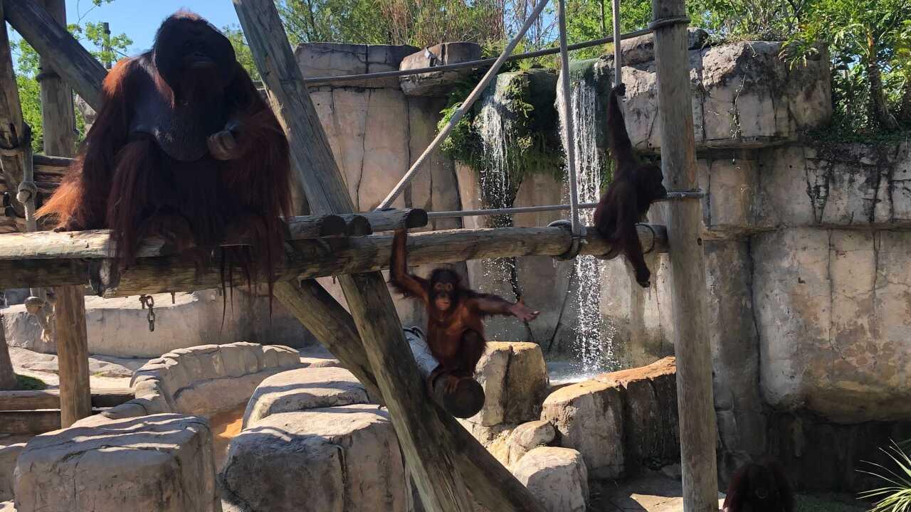 Zoo Tampa