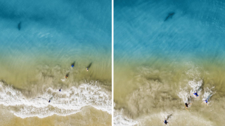 Dad's drone captures images of shark swimming near his kids