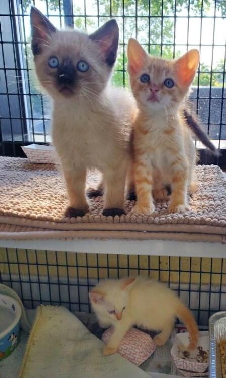 Kittens 4.jpg