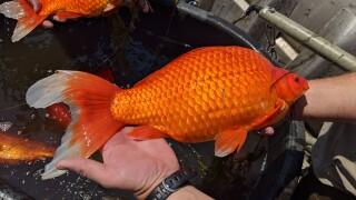1 fish.jpeg