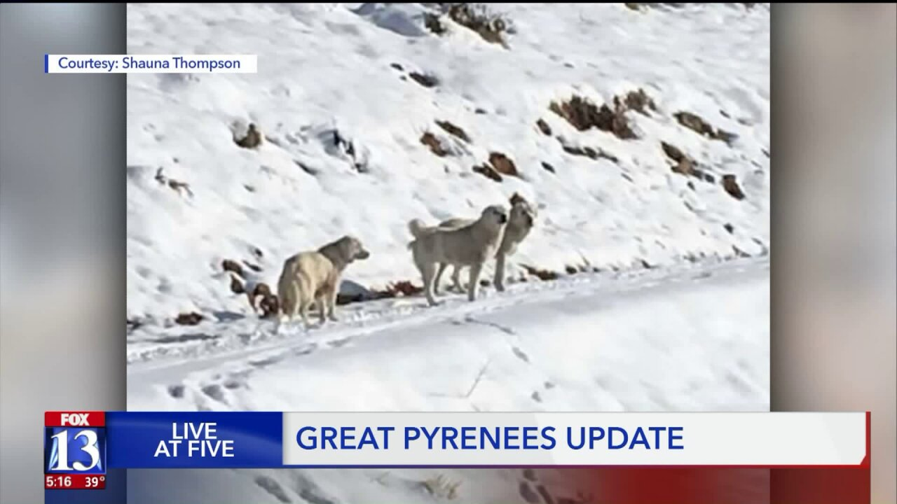 Mother of rescued puppies remains on mountain despite repeatedattempts