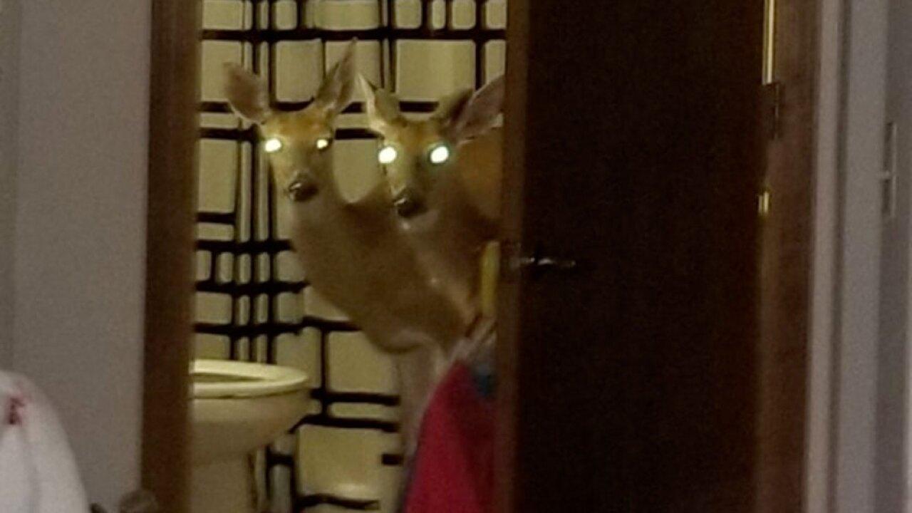 wptv-decatur-deer-.jpg