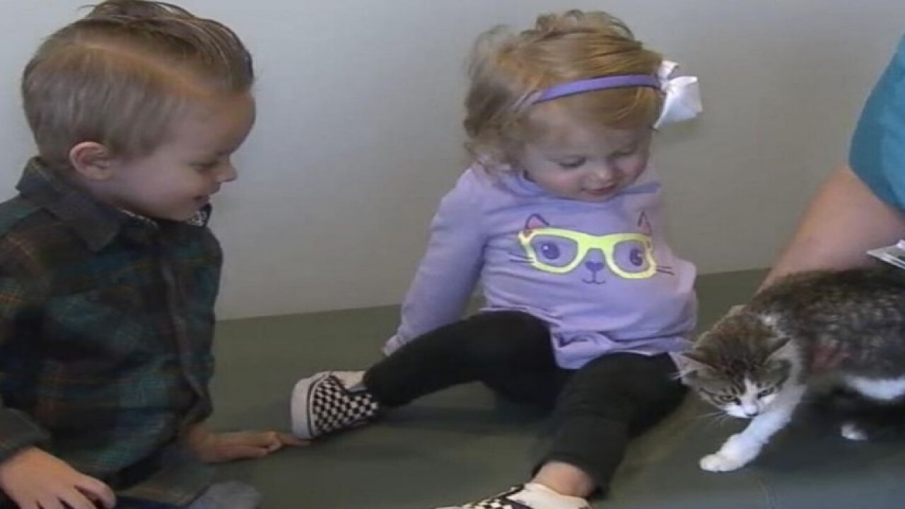 2-year-old girl with 1 arm adopts 3-legged cat