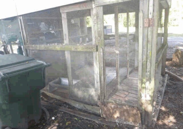 Photos: Scene of Collier County home where 51 dogs were rescued from unsafe conditions