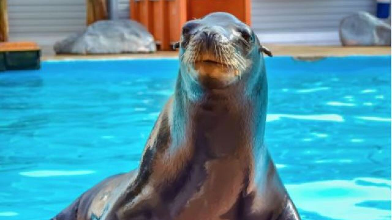 Milwaukee County Zoo welcomes rescued sea lion