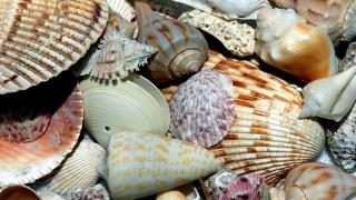 florida-sea-shell-generic.png