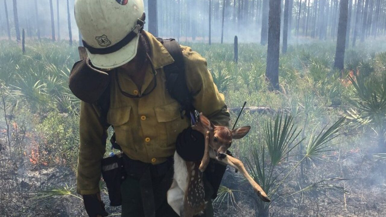 Photo of firefighter saving fawn from 120K-acre fire goes viral