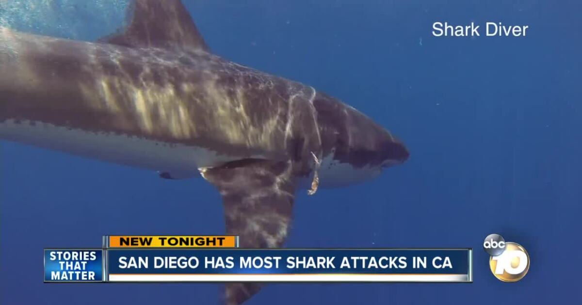 This County Has Had The Most Shark Attacks In California Since