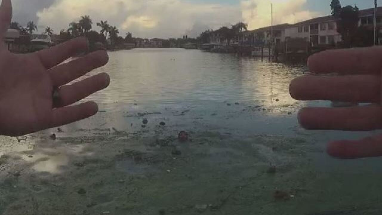 Fleeing suspect overcome by algae in Cape Coral
