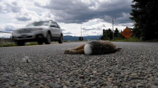 'Ride for Roadkill:' Nonprofit hopes to spread global effort to document roadkill in Montana