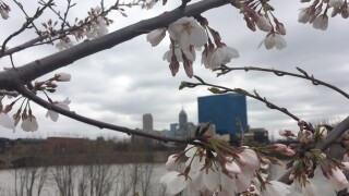 PICS: Apple Blossoms tease Spring's arrival