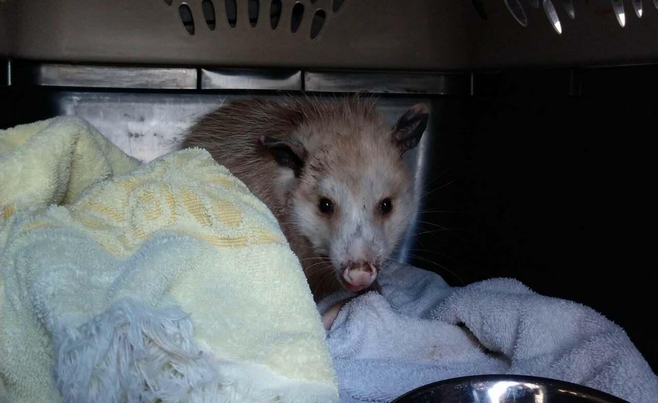 Courtesy: Nebraska Wildlife Rehab, Inc