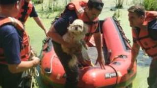 Kalamazoo Public Safety, Animal Control, save dog from swamp